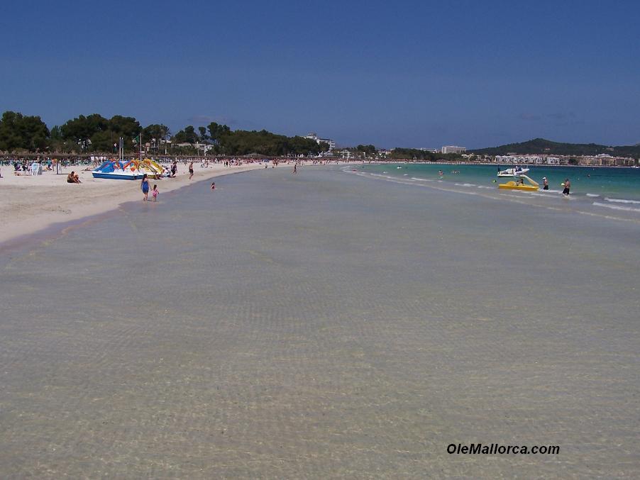 Hotel Playa Mallorca Guia Hotel En Playas De Mallorca